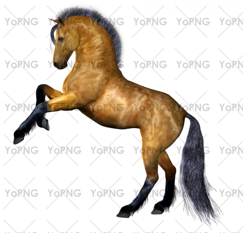 horse png image free download for design.