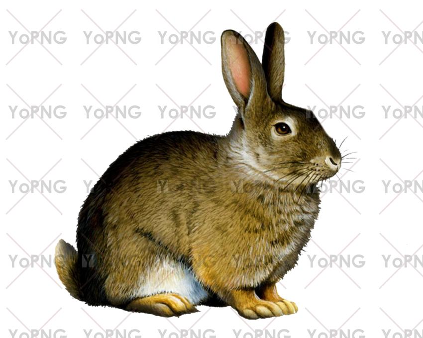 rabbit png image free download for design.