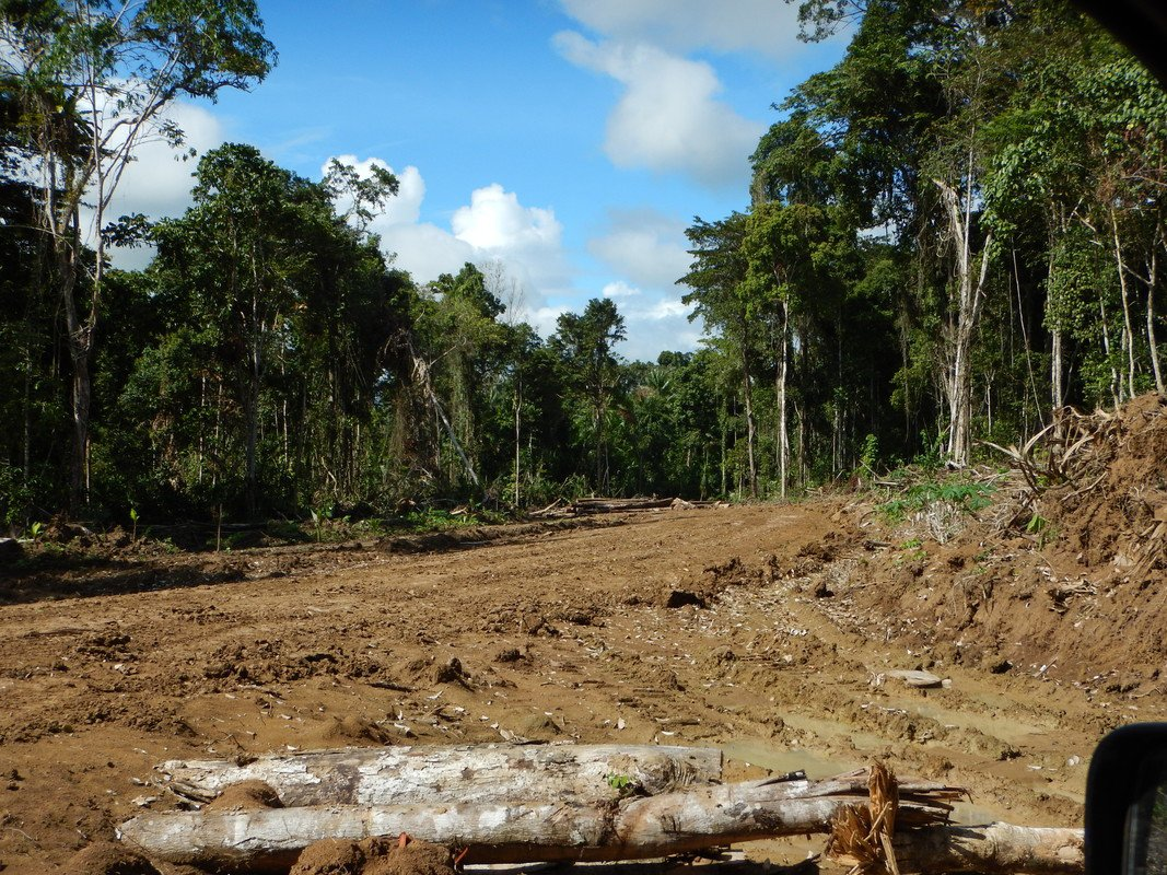 PNG hosts APEC meeting on illicit timber trade while.