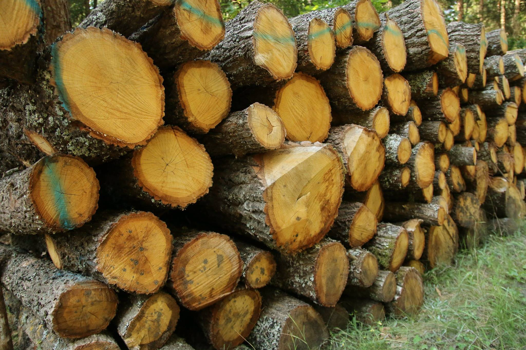 List of companies buying timber from the Forest.