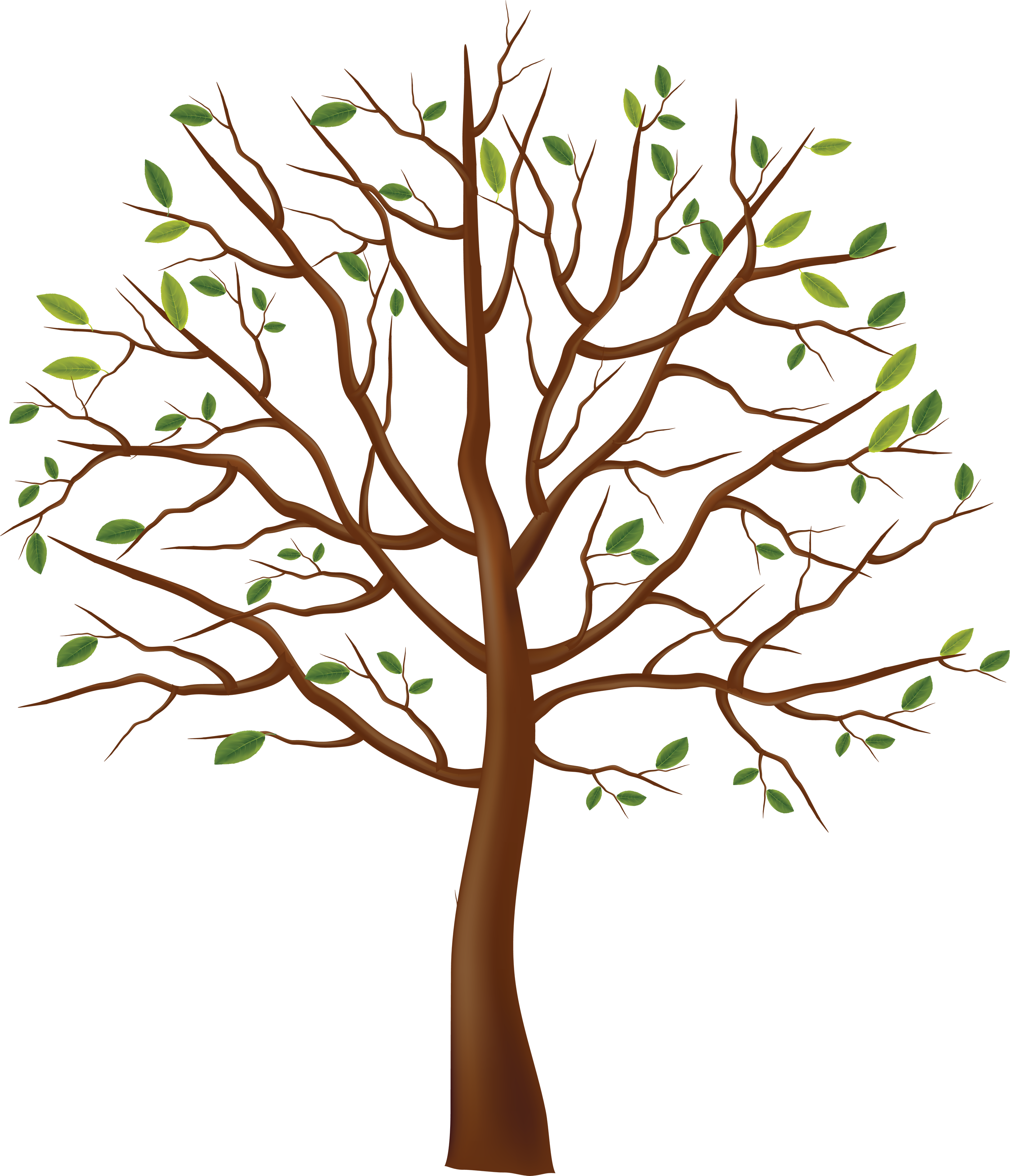tree clipart png - Clipground