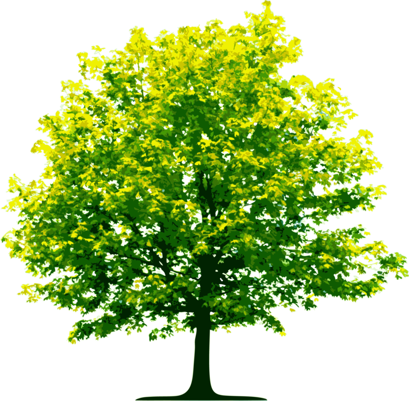 Download Free png tree png image, free download, picture.
