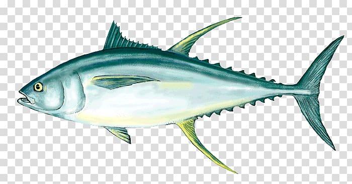 Yellowfin tuna Fishing Fish as food Poke, Ahi Tuna.