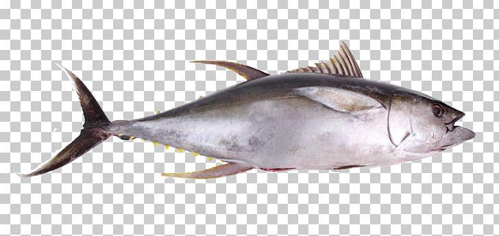 Thunnus Seafood Oily Fish Yellowfin Tuna PNG, Clipart.
