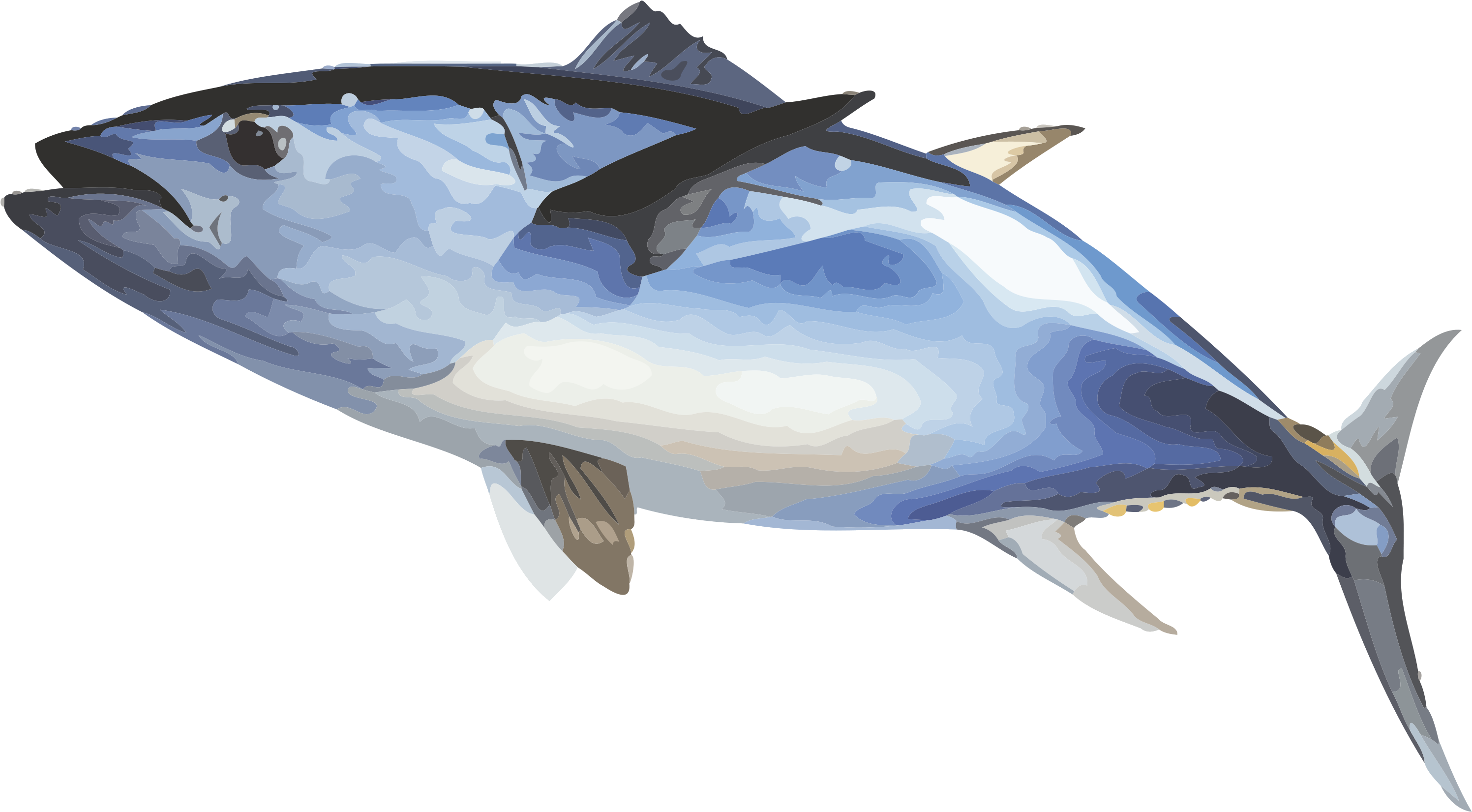 Fish Ecosia Inewconcom Your Transparent Background Tuna Png.