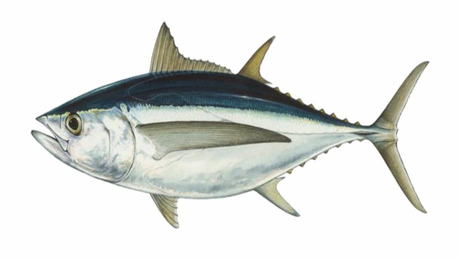 Fish Tuna Seafood.
