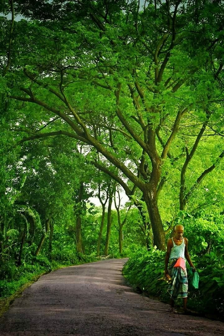 Beautiful Bangladesh: A village road through the trees.