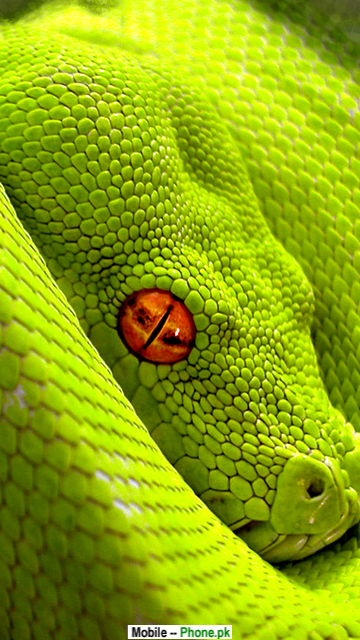 Green snake Picture Wallpapers Mobile Pics.