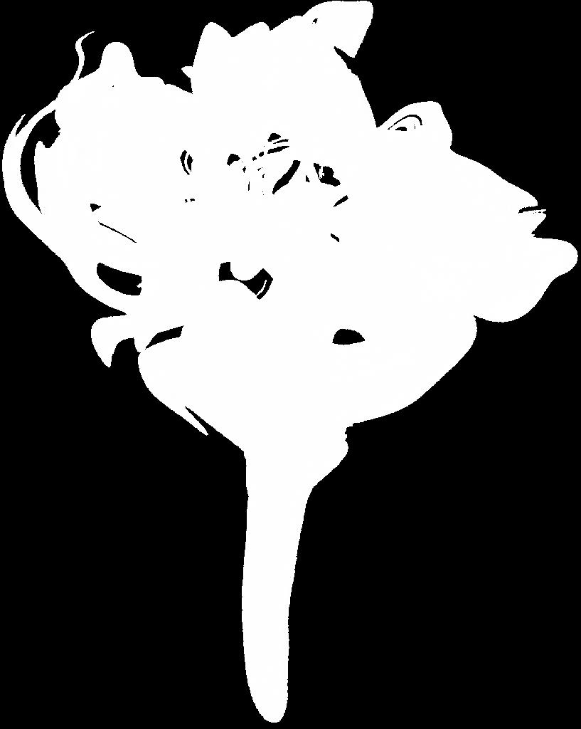 10 White Smoke (PNG Transparent).