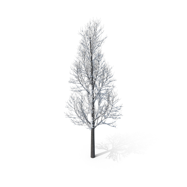 Winter Tree PNG Images & PSDs for Download.