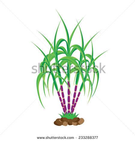 Poaceae Stock Vectors, Images & Vector Art.