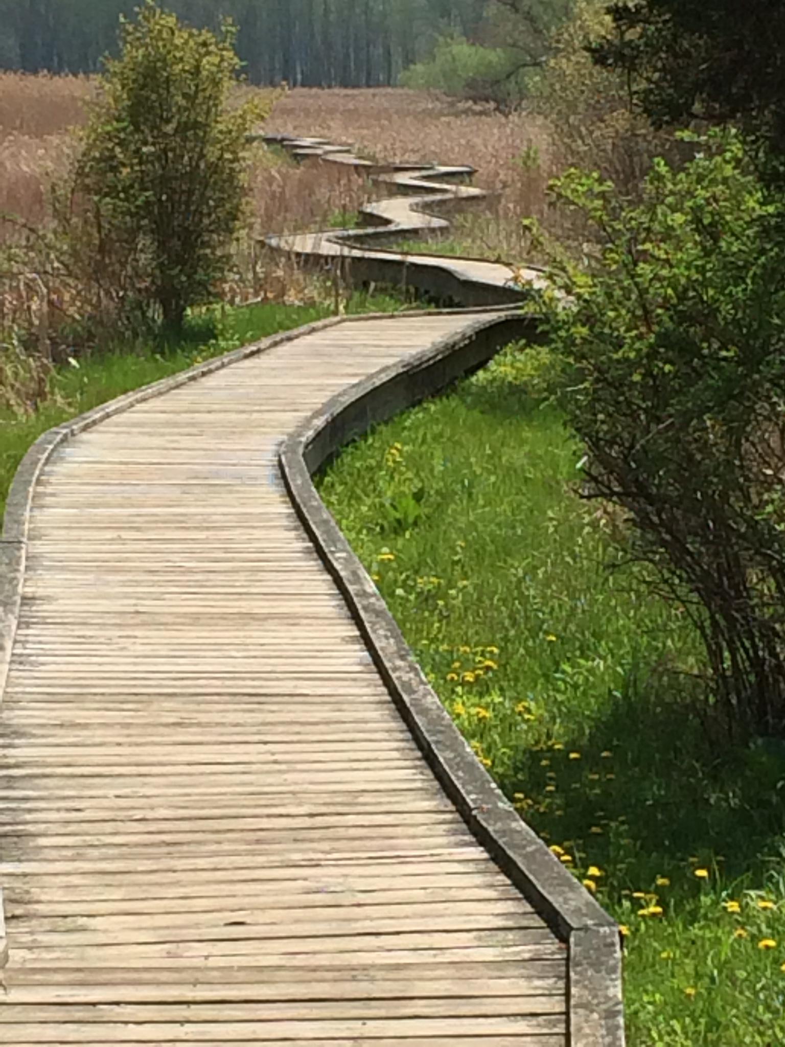 Pochuck Valley boardwalk, part of Appalachian Trail, in Vernon.