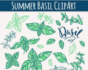 Basil clip art.