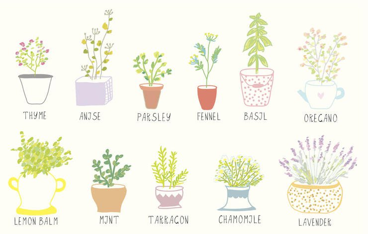 10 Tips For Growing An Organic Herb Garden On A Budget.