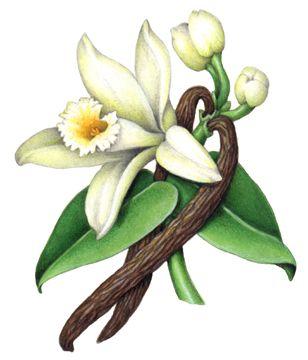 Medicinal & Fragrance Herbs Stock Art.