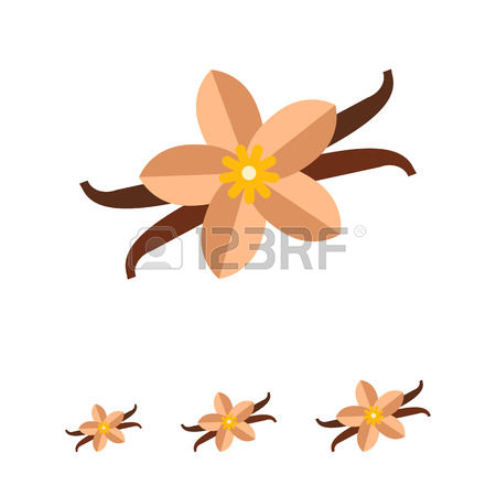 301 Vanilla Flower And Pods Stock Illustrations, Cliparts And.