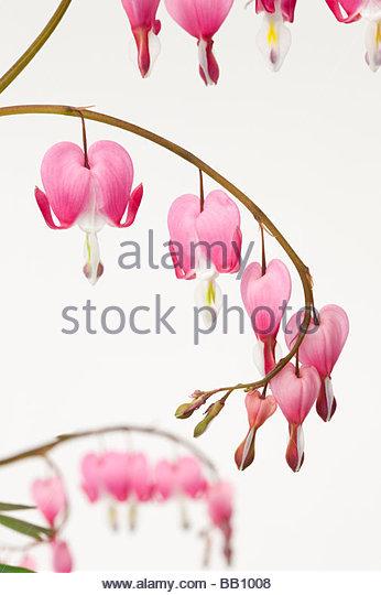 Heart Shaped Flowers Stock Photos & Heart Shaped Flowers Stock.