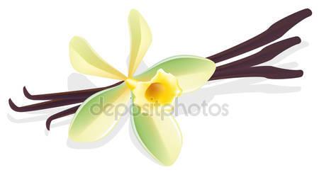 Vanilla flower Stock Vectors, Royalty Free Vanilla flower.