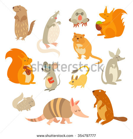 Muskrat Stock Photos, Royalty.