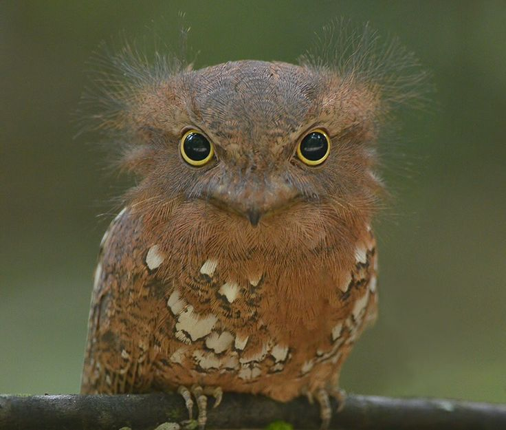 1000+ images about OWLS 2 on Pinterest.