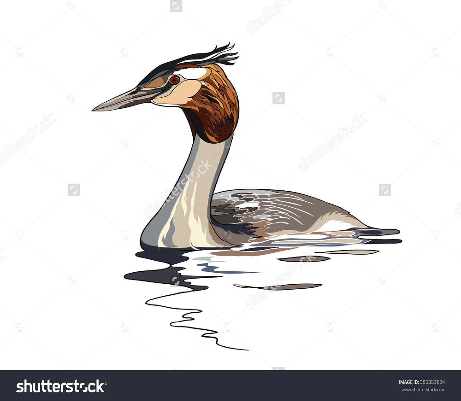 Great Crested Grebe (Podiceps Cristatus) Vector Image.