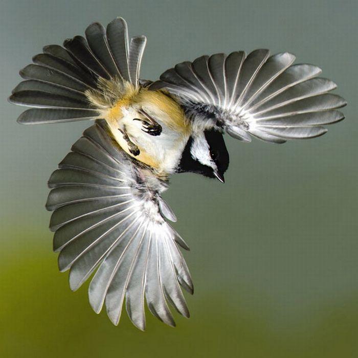 1000+ images about Chickadeeeeeee:) on Pinterest.