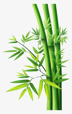 Bamboo Tree PNG Images.