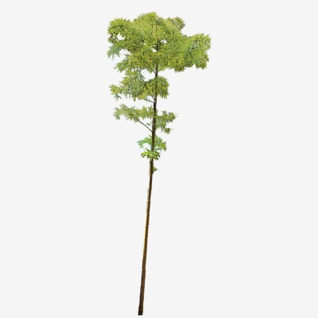 One Stem Bamboo di 2019.