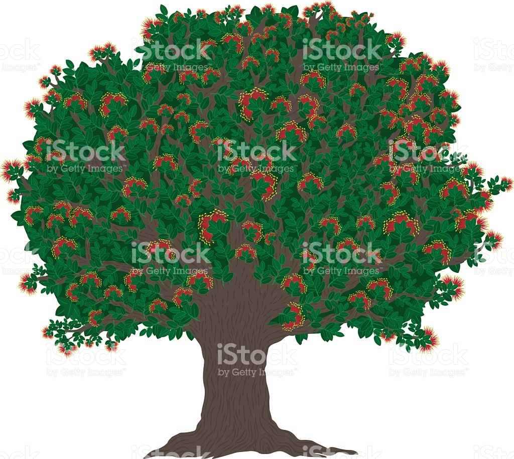 Pohutukawa Tree With Blooming Red Flowers stock vector art.