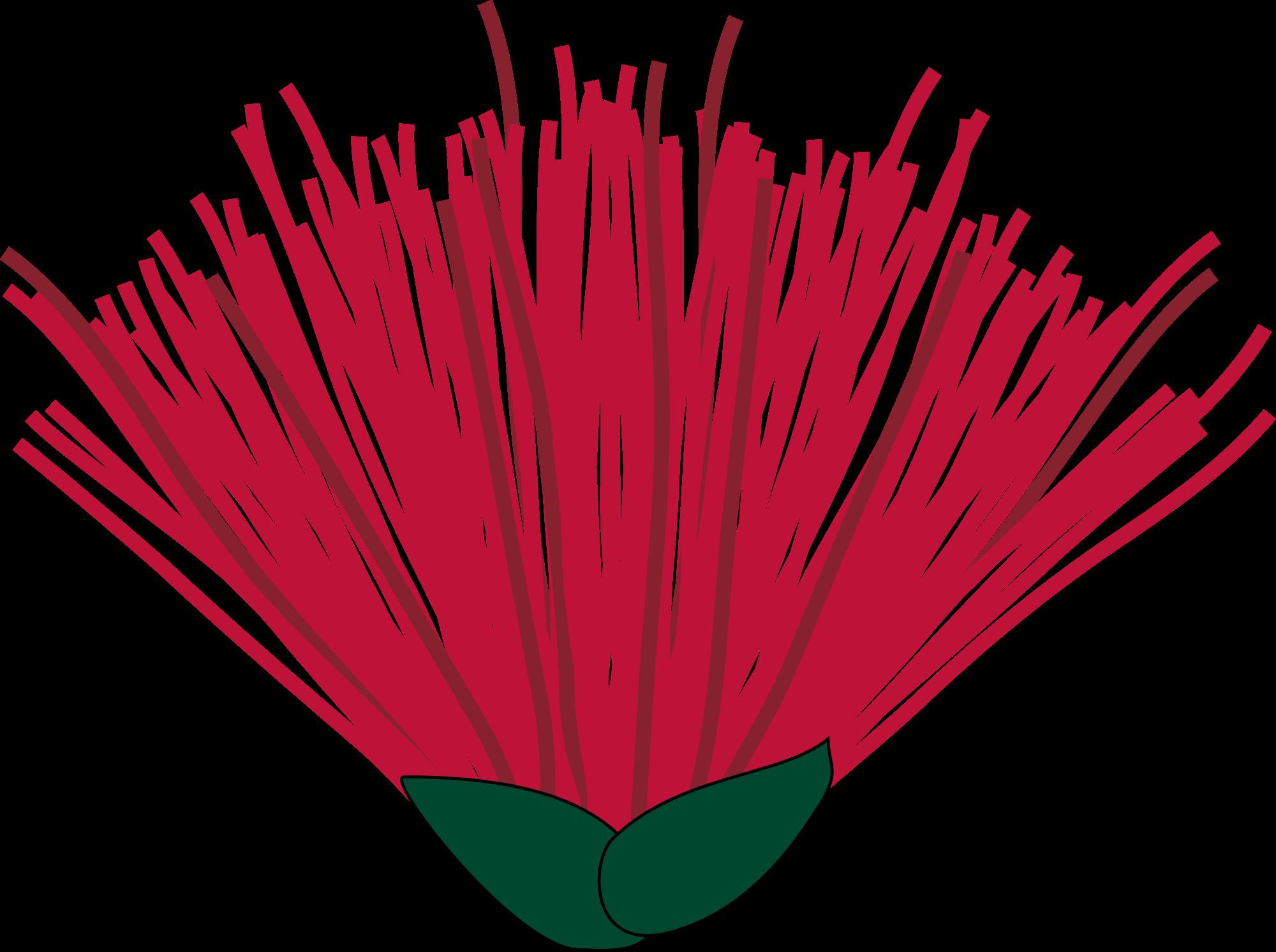 File:Pohutukawa flower.svg.