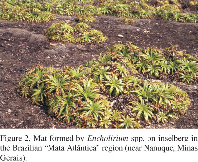 Tropical inselbergs: habitat types, adaptive strategies and.
