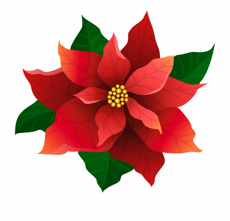 Poinsettia Clipart Christmas Candle Light Free PNG Images.