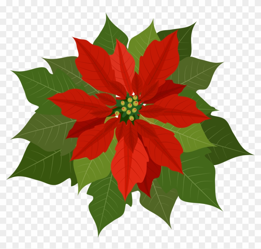 Poinsettia Clipart Png.