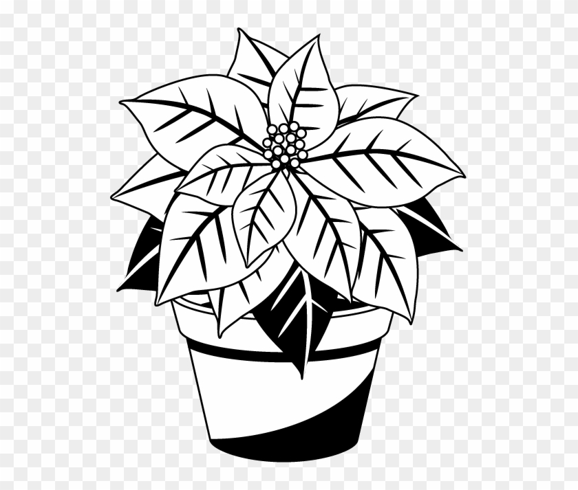 Clip Art Library Poinsettia Clipart Black And White.