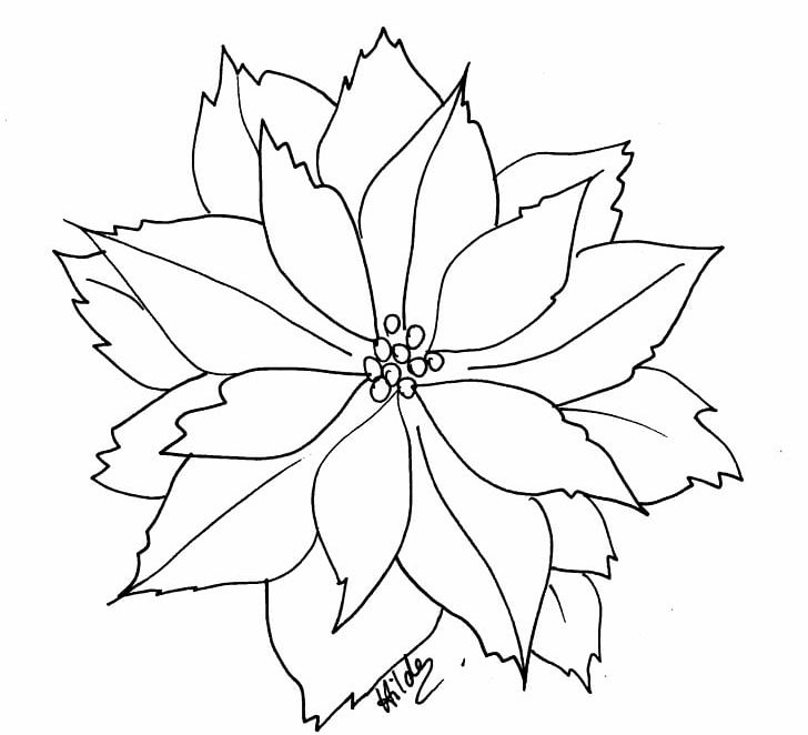 Poinsettia Coloring Book Flower Christmas PNG, Clipart.