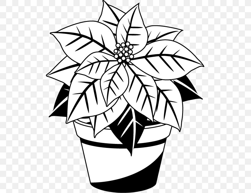 Poinsettia Christmas Black And White Red Clip Art, PNG.
