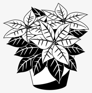 Free Poinsettia Clip Art with No Background.