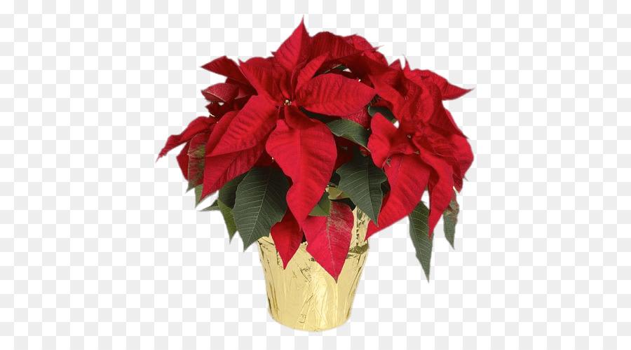 Christmas Poinsettia Clipart.