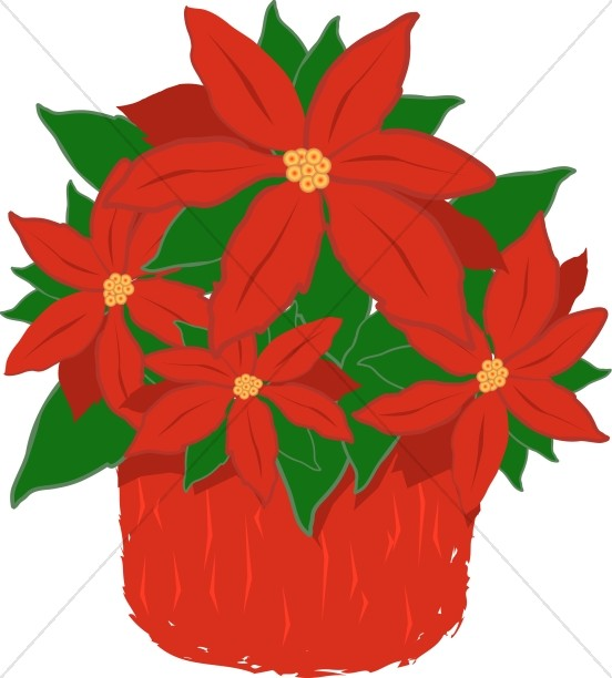 Red Poinsettia Plant.