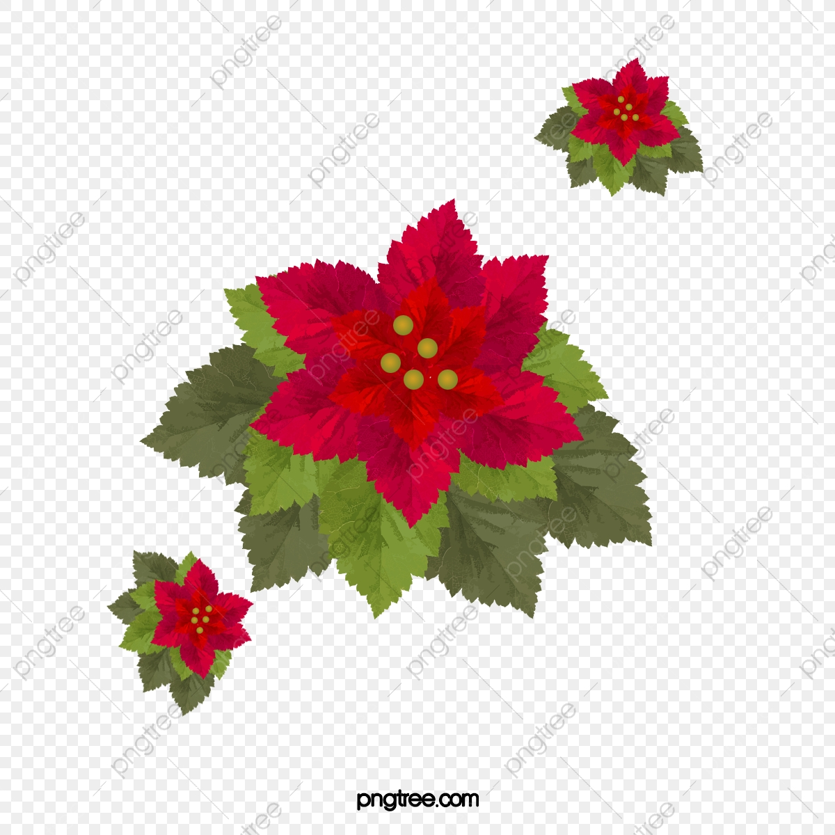 Poinsettia Painted Vector Material, Poinsettia, Hand Painted.