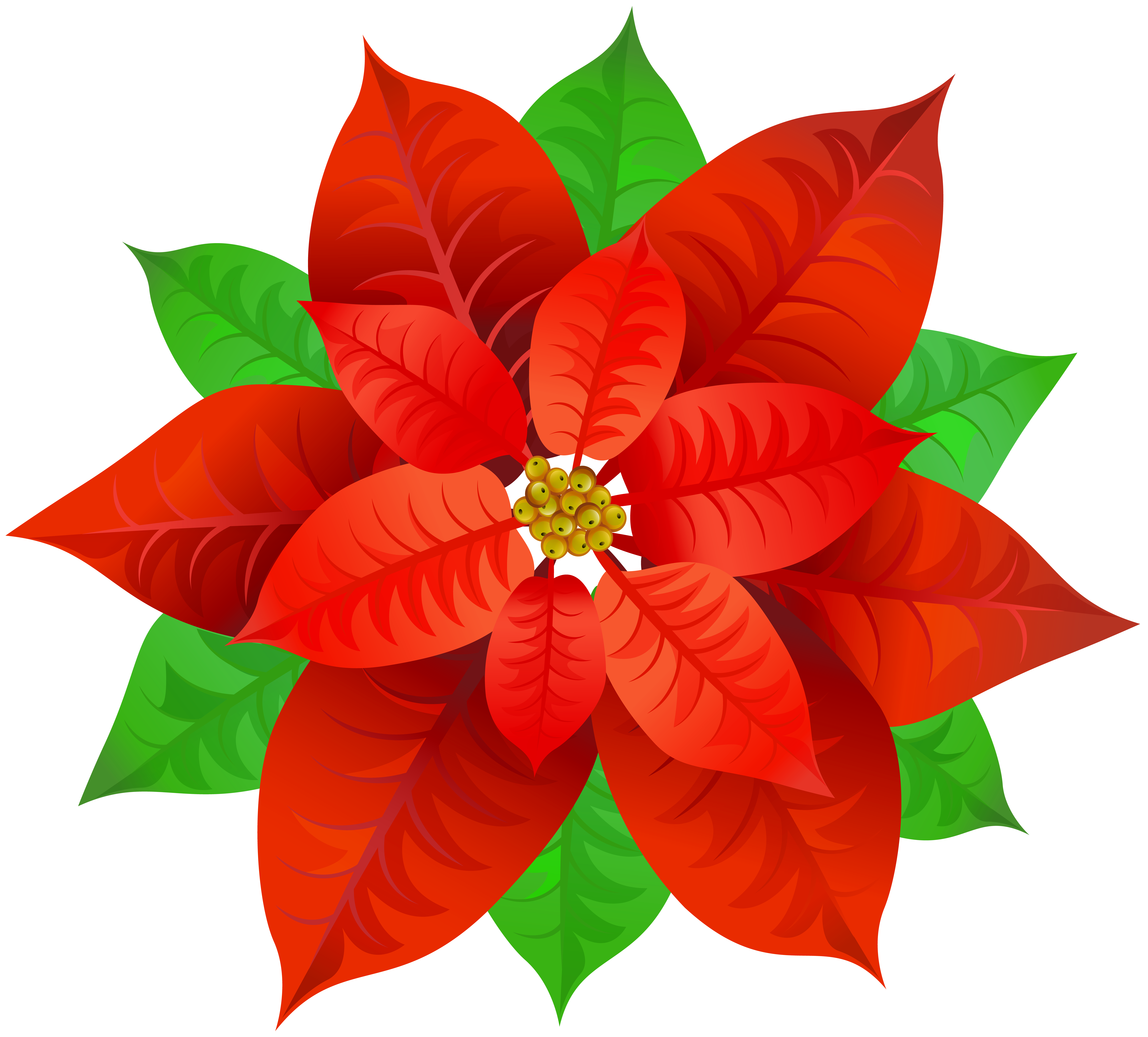 Poinsettia Transparent PNG Image.