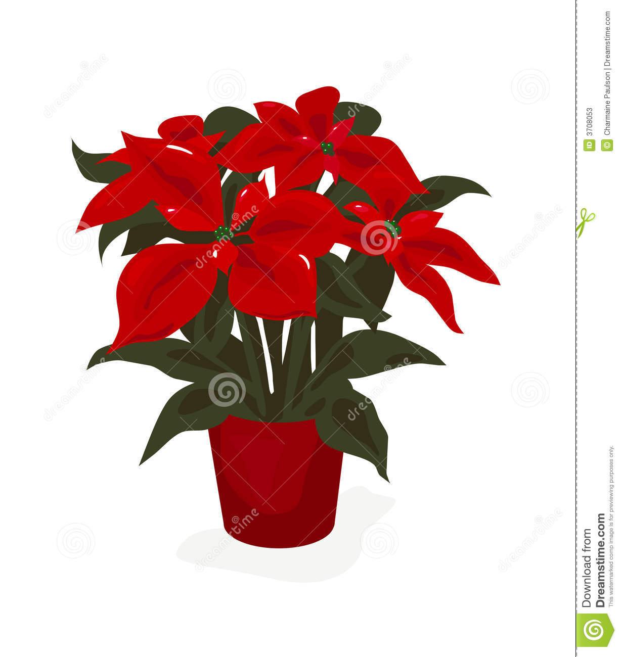 Poinsettia Clipart.