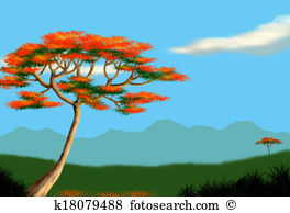 Poinciana Stock Illustrations. 30 poinciana clip art images and.