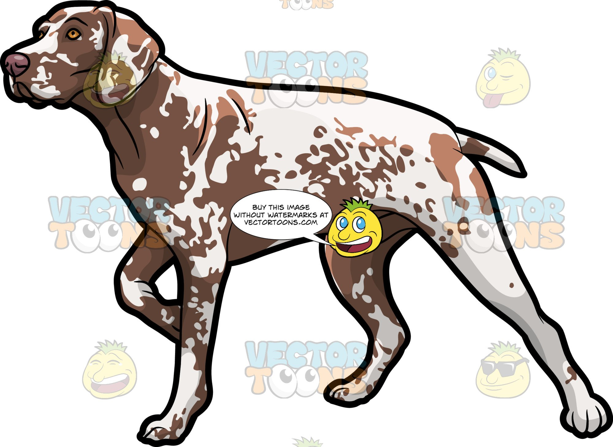 A German Shorthaired Pointer Pet Dog.