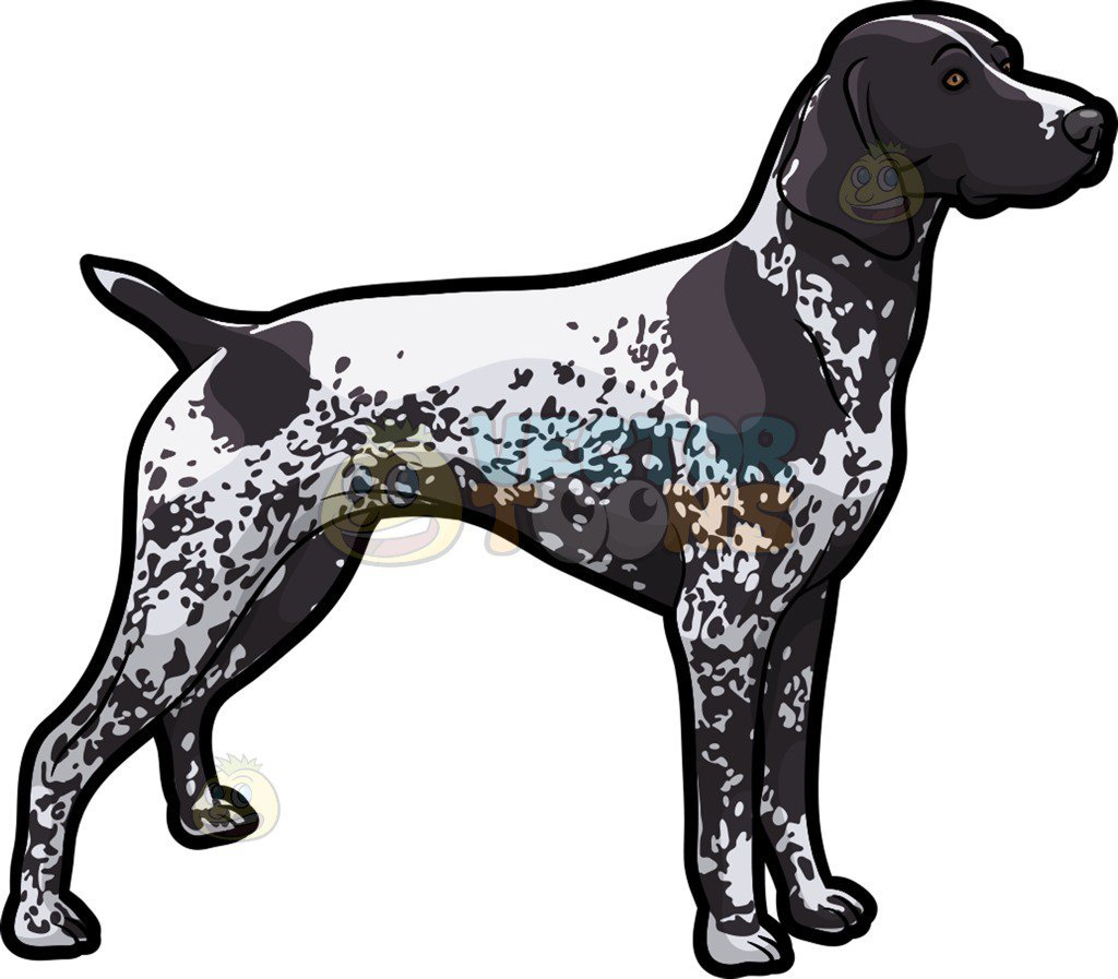 Pointer dog clipart 7 » Clipart Portal.