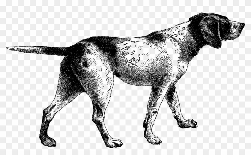 Pointer Dog Clip Art.