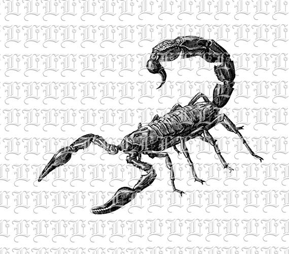 Scorpio Poisonous Desert Animal Scorpion Vintage Clip Art.