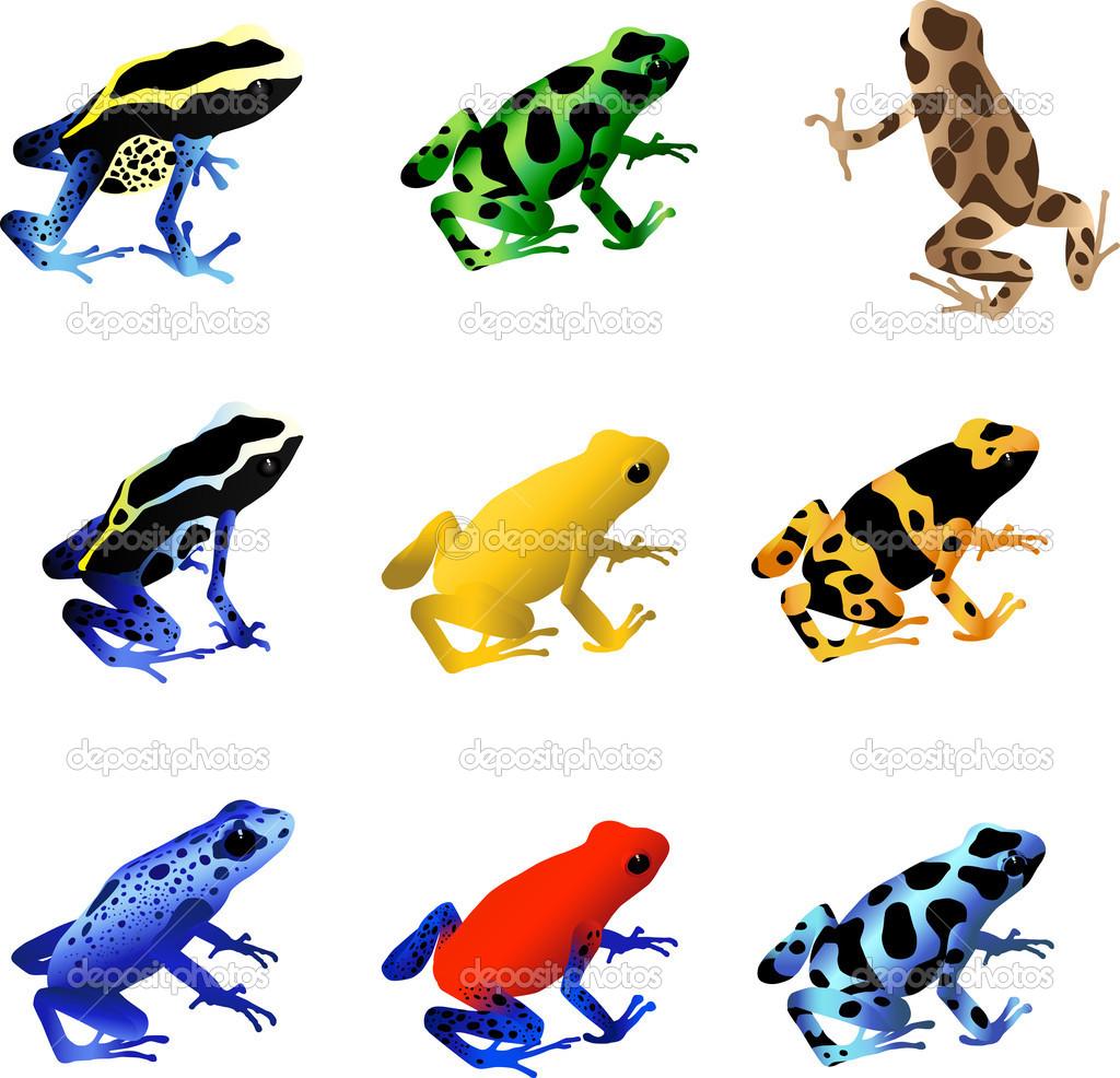 Poison Dart Frogs — Stock Vector © macropixel #6116344.