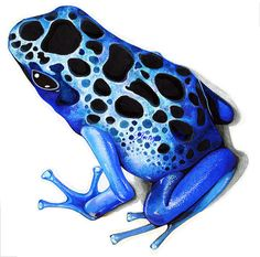 Showing post & media for Poison dart frog cartoon.
