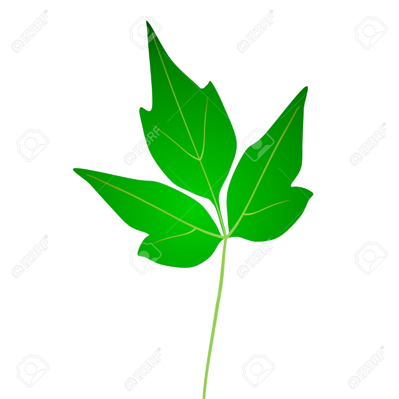 Green ivy leaves clipart.